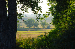 View of Fields and Prairie Through Trees Royalty Free Stock Photos