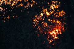 FIERY SUNSET GLOW VISIBLE THROUGH FOLIAGE OF AFRICAN BUSH. View of the fiery glow of the sunset visible through the branches and foliage of a tree in Africa royalty free stock photo
