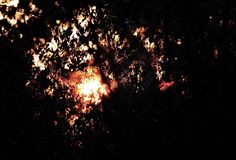 FIERY SUNSET GLOW VISIBLE THROUGH FOLIAGE OF BUSH. View of the fiery glow of the sunset visible through the branches and foliage of a tree in Africa royalty free stock image
