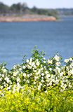 View of Finland Gulf. With white yellow flowers in the foreground stock image