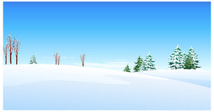 The view of Fir trees. Over snow landscape Stock Photos