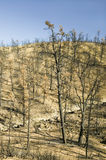 View of fire damage from Day Fire, 2006, along Lockwood Valley Road (near Pine Mnt. and Frazier Park) in Las Padres National Fores Stock Photography