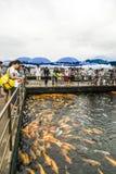 View fish platform Stock Photography