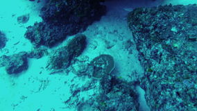 View of fishes scurry among corals and seaweed stock video footage