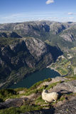 View of the fjord in Norway Royalty Free Stock Photo