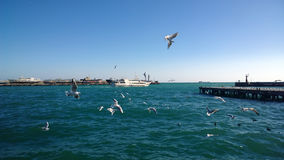 The view of the fleeing ship in the sea and a large number of seagulls flying in the foreground in a Sunny day Stock Images