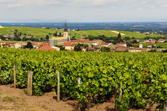 View of Fleurie village and vineyards, Beaujolais, France Royalty Free Stock Images