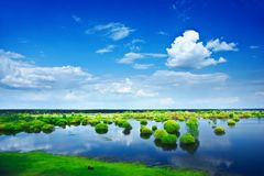 View on a flood field Royalty Free Stock Photography