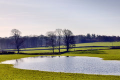 View of a flooded field and trees Royalty Free Stock Photography