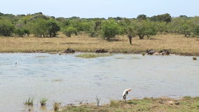 The view of flora and fauna in Yala National Park, Sri Lanka. stock footage