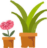 The view of flowering plant Stock Image