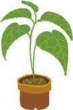 The view of flowerpot Stock Images