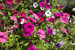 View of flowers blooming in park Royalty Free Stock Photography