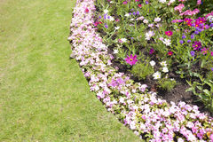 View of flowers blooming in park Royalty Free Stock Photos