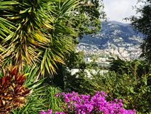 View through Flowers of Funchal on the island of Madeira in the Atlantic Ocean. Funchal is the Capital of the island of Madeira. The distinctive houses and Stock Image