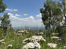 View of flowers high altitude. Beautiful high altitude landscape Stock Photo