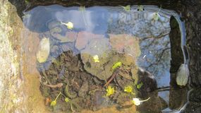 view of flowers and leaves under water royalty free stock image