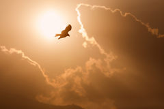View of a flying eagle with wings open and sun and clouds in background Stock Photo