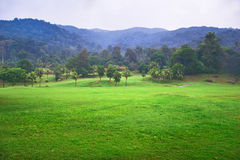 View on foggy jungle Royalty Free Stock Photos