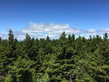 View of forest from above tree line with blue sky Royalty Free Stock Photography