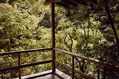 Maple trees outside a balcony stock photography