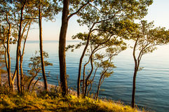 View forest Baltic sea Royalty Free Stock Photos