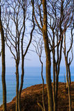 View forest Baltic Sea Stock Image