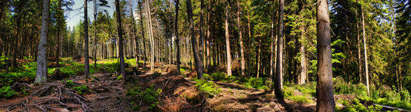 View from forest in Beskidy mountains, Poland Stock Image