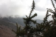 View of the forest. a branch of a thorny shrub. a mountainous background with thick fog in the Apuan Alps.  stock image