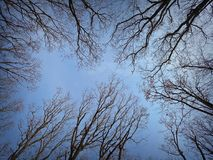 View of forest canopy in winter Stock Images