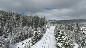 View of Forest Coated with Snow Royalty Free Stock Photography