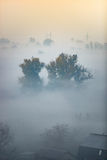 View of forest covered by fog at early morning before sunrise Stock Photo