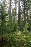 View of a forest in Finland Stock Photo