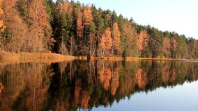 View of the forest from the lake. Currently on fall season the place looks very tranquil and serene stock video