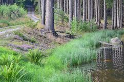 View of the forest landscape. South Bohemia Stock Photography