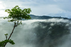 View of forest on Morning Mist. At Tropical Mountain Range after Stock Photo