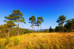 View of forest mountains landscape Royalty Free Stock Images