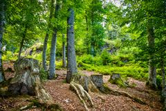 The mystical forest Stock Image