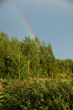 View of forest and rainbow. In summer Stock Images