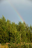 View of forest and rainbow. In summer Royalty Free Stock Photography