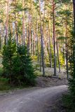 View of the Forest Road, heading deaper in the Woods - Moody Pho. View of the Forest Road, heading deaper in the Woods on the Early Spring Evening, with Tire Royalty Free Stock Images