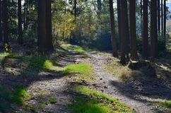 View of forest road, south Bohemia royalty free stock image