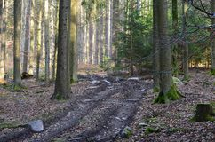 View of forest road, south Bohemia Royalty Free Stock Photo