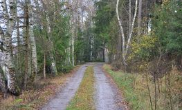 View of forest road. South Bohemia, Czech Republic Stock Image