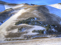 View of forest trees in snowy plateau of Castelluccio di Norcia Royalty Free Stock Photo