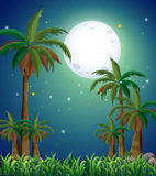 A view of the forest under the bright fullmoon Stock Photography
