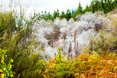 View of the forest in Wai-O-Tapu Geothermal Wonderland, Rotorua, New Zealand.  stock images