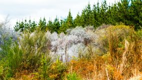 View of the forest in Wai-O-Tapu Geothermal Wonderland, Rotorua, New Zealand.  royalty free stock images