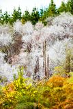 View of the forest in Wai-O-Tapu Geothermal Wonderland, Rotorua, New Zealand. Vertical.  royalty free stock photos