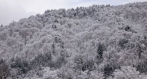 View of the forest in winter Stock Photos